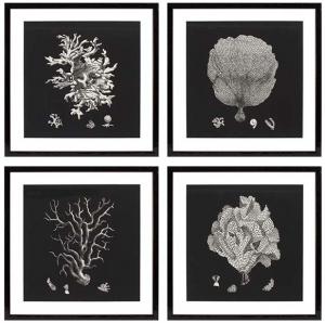 Постеры Black & Tan Corals 64X64 / 64X64 / 64X64 / 64X64 CM