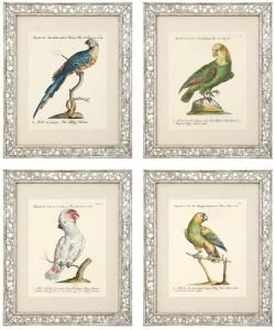 Постеры Dunbar I 49X59 / 49X59 / 49X59 / 49X59 CM