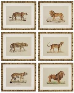 Постеры Lion Tigre Jaguar 54X44 / 54X44 / 54X44 / 54X44 / 54X44 / 54X44 CM
