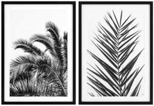 Постеры Palm Leaves 75X105 / 75X105 CM