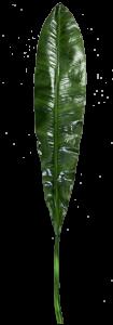 Лист искусственный Laurus nobilis 15X111 CM