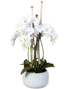 Орхидея в горшке искусственная 40X40X100 CM