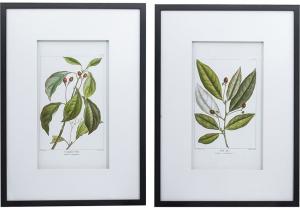 Комплект из двух постеров Flora 50X70 / 50X70 CM