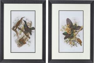 Постеры Birds 50X70 / 50X70 CM