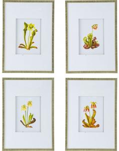 Комплект из 4 постеров Flora 50X70 / 50X70 / 50X70 / 50X70 CM
