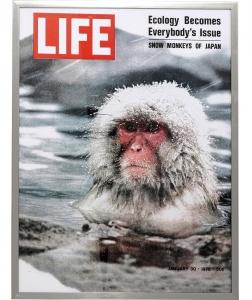 Постер Magazin Monkey 63X83 CM