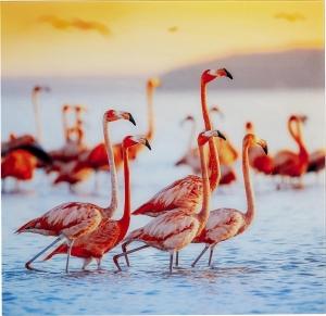 Постер на стеклянной основе Flamingo Family 80X80 CM