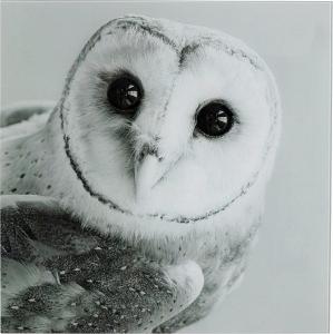 Постер на стекле Owl Face 60X60 CM