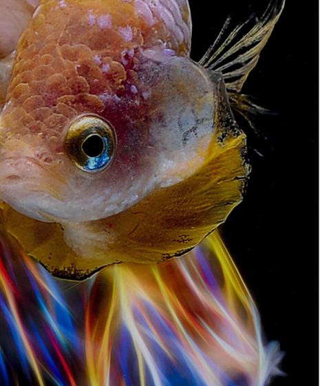 Постер на стекле Fish 100X100 CM 4