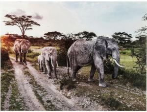 Принт на стеклянной основе Elefant Family 160X120 CM