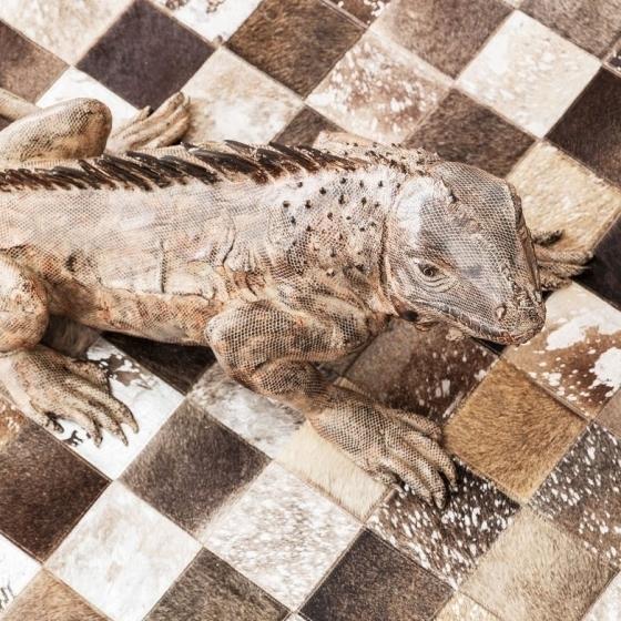 Напольный декоративный элемент Iguana 132X52X55 CM 10