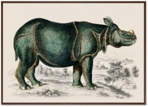 Постер Rhinoceros 105X75 CM