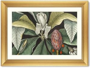 Постер Beauty bloom 81X61 CM