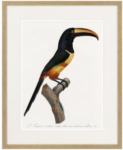 Beautiful toucans №4 1806 г. 42X52 CM