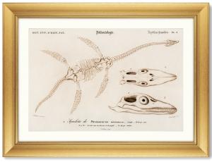 Постер Plesiosaurus 81X61 CM