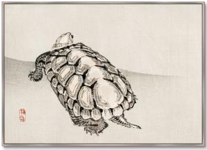 Постер Turtle 105X75 CM