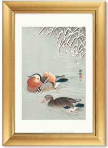 Постер Mandarin ducks 51X71 CM