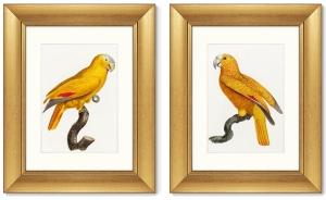 Диптих The Parrot of Paradise 41X51 / 41X51 CM