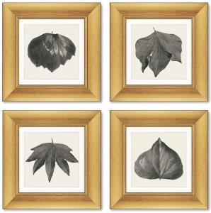 Набор из 4-х картин The Ivy leaves 36X36 / 36X36 / 36X36 / 36X36 CM
