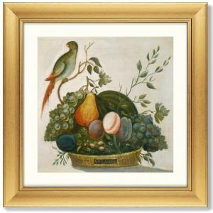 Постер Basket of Fruit with Parrot 61X61 CM