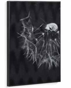 Постер Calantha Dandelion 50X70 CM