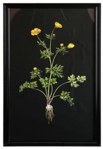 Постер Жёлтый цветок 135X79 CM