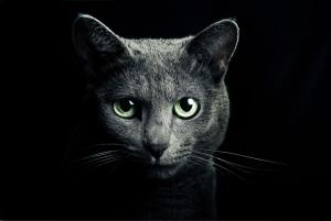 Фотография на закаленном стекле Felino 120X80 CM